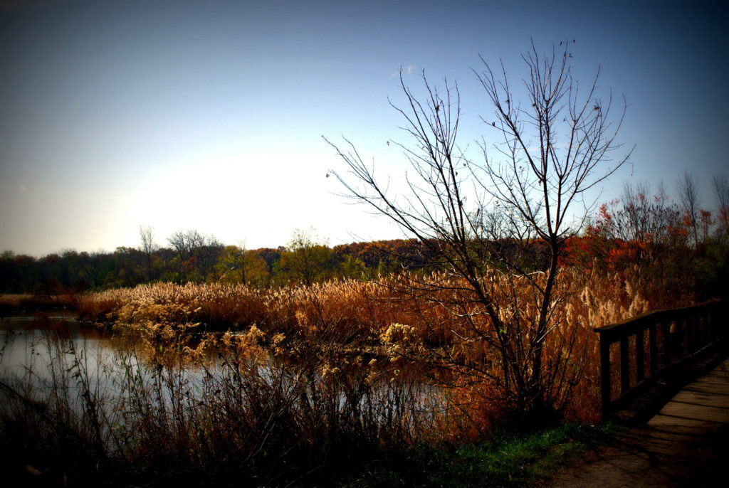 Photo: Autumn Landscape Wetlands Bridge - Color Nature Landscape Photograph - Copyright 2020 Frank J Casella
